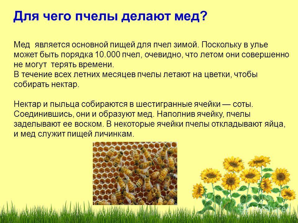 Для чего пчелы делают мед? Мед является основной пищей для пчел зимой. Поскольку в улье может быть порядка 10.000 пчел, очевидно, что летом они совершенно не могут терять времени. В течение всех летних месяцев пчелы летают на цветки, чтобы собирать н