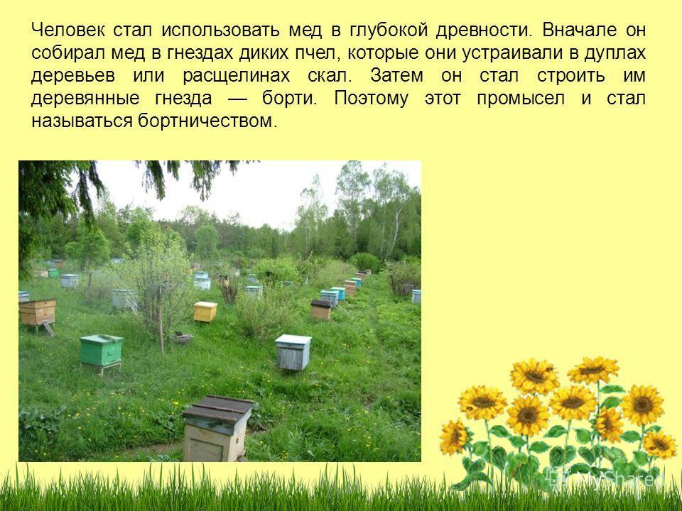 Человек стал использовать мед в глубокой древности. Вначале он собирал мед в гнездах диких пчел, которые они устраивали в дуплах деревьев или расщелинах скал. Затем он стал строить им деревянные гнезда борти. Поэтому этот промысел и стал называться б