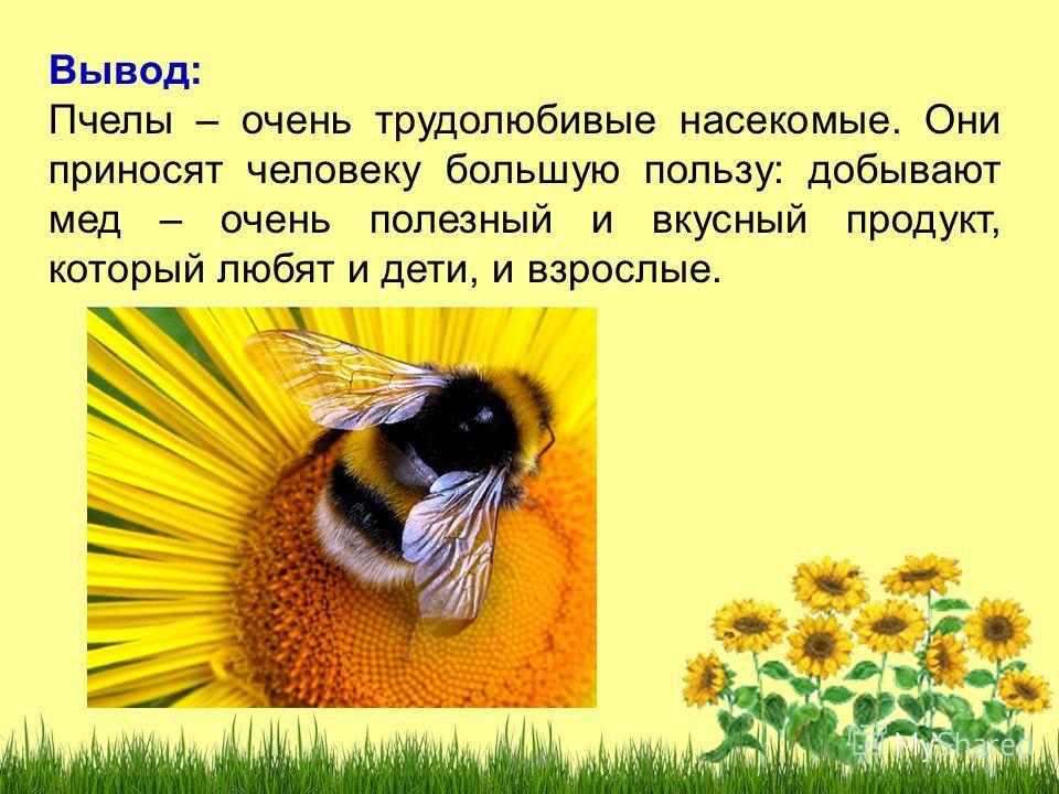 Вывод: Пчелы – очень трудолюбивые насекомые. Они приносят человеку большую пользу: добывают мед – очень полезный и вкусный продукт, который любят и дети, и взрослые.