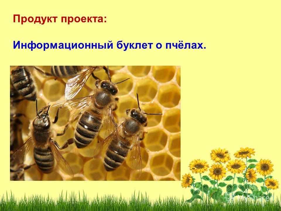 Продукт проекта: Информационный буклет о пчёлах.