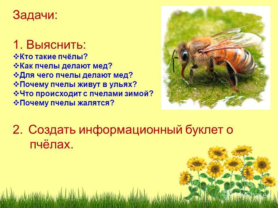 Задачи: 1. Выяснить: Кто такие пчёлы? Как пчелы делают мед? Для чего пчелы делают мед? Почему пчелы живут в ульях? Что происходит с пчелами зимой? Почему пчелы жалятся? 2.Создать информационный буклет о пчёлах.