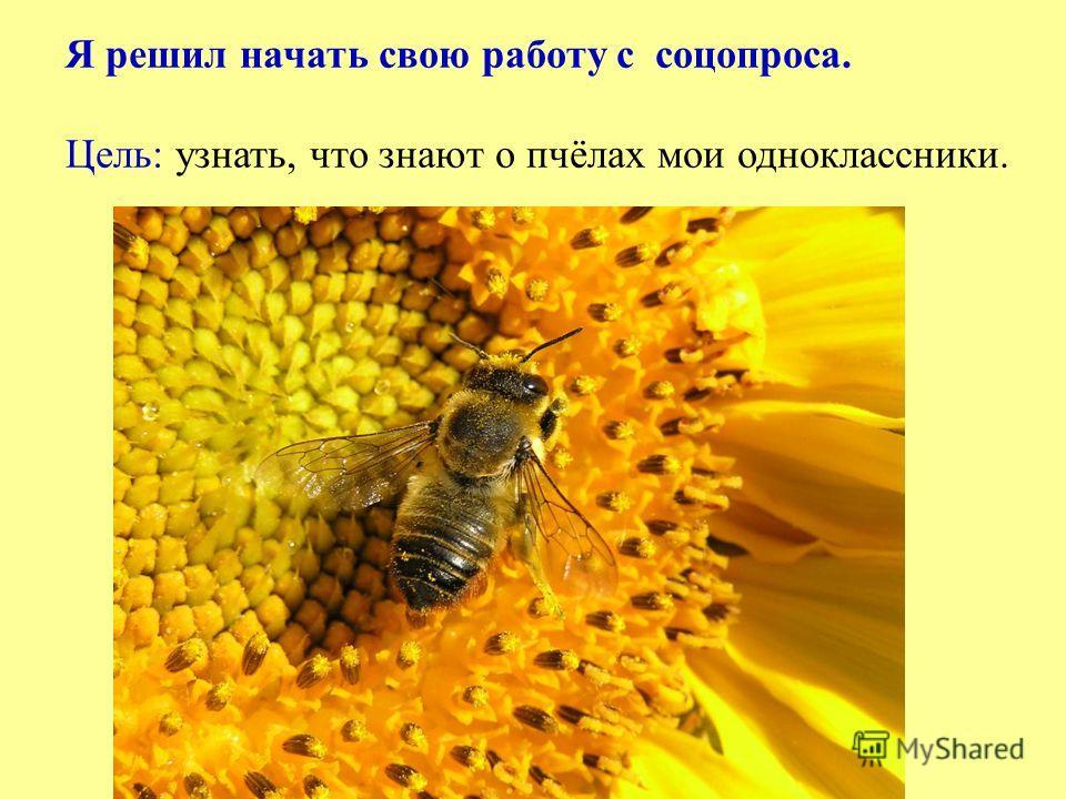 Я решил начать свою работу с соцопроса. Цель: узнать, что знают о пчёлах мои одноклассники.