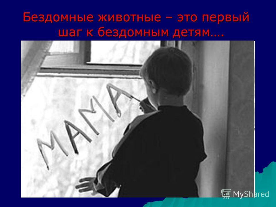 Бездомные животные – это первый шаг к бездомным детям….