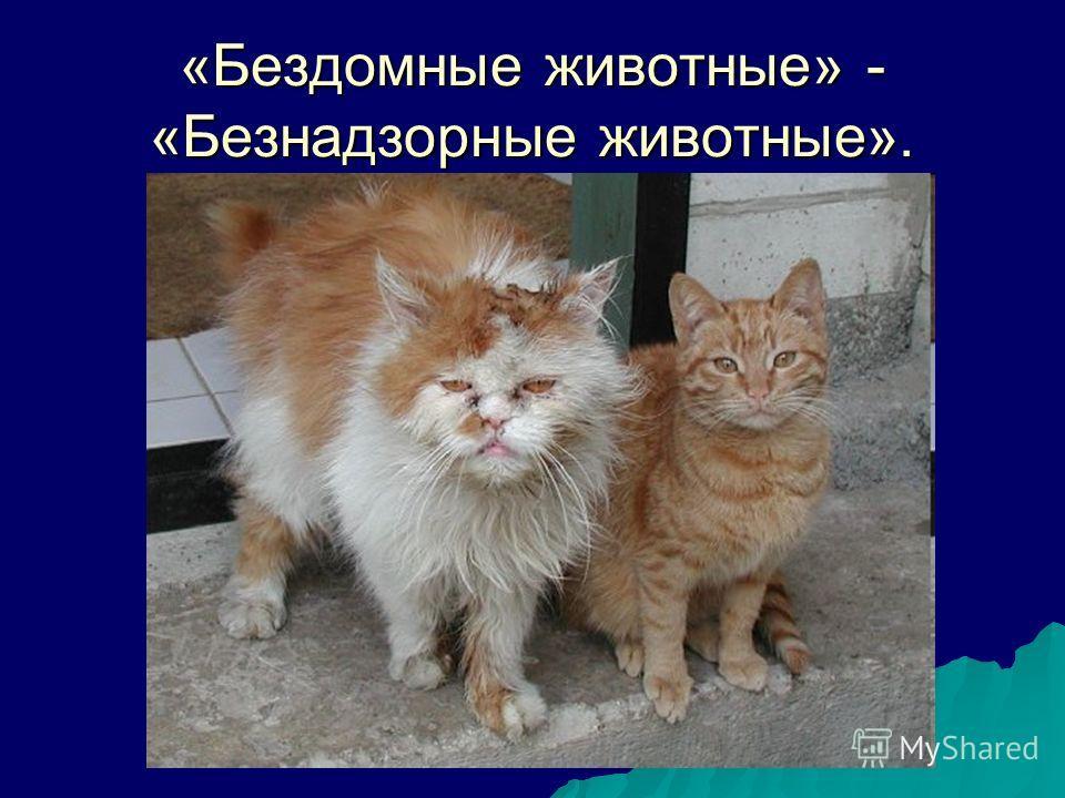 «Бездомные животные» - «Безнадзорные животные».