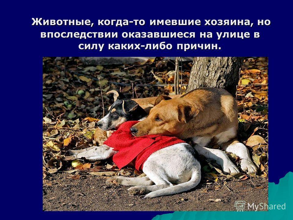 Животные, когда-то имевшие хозяина, но впоследствии оказавшиеся на улице в силу каких-либо причин. Животные, когда-то имевшие хозяина, но впоследствии оказавшиеся на улице в силу каких-либо причин.