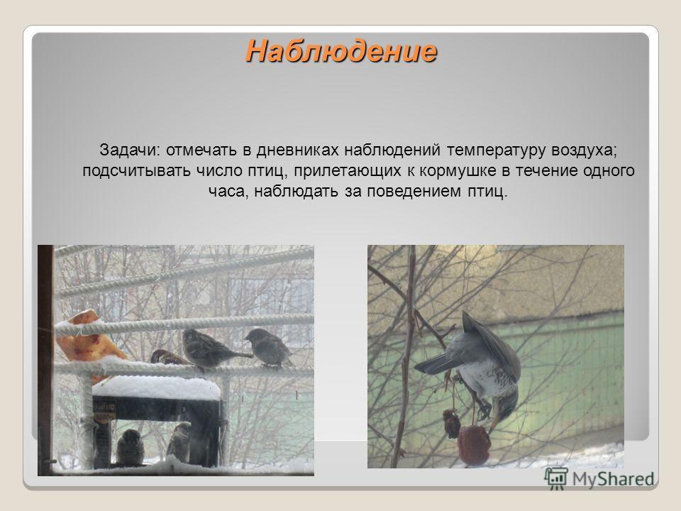 Наблюдение З Задачи: отмечать в дневниках наблюдений температуру воздуха; подсчитывать число птиц, прилетающих к кормушке в течение одного часа, наблюдать за поведением птиц.