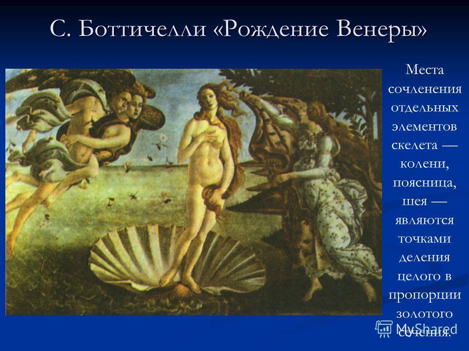 Места сочленения отдельных элементов скелета колени, поясница, шея являются точками деления целого в пропорции золотого сечения. С. Боттичелли «Рождение Венеры»