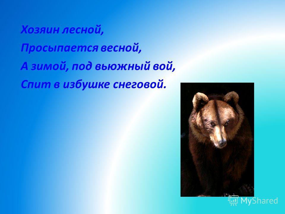 Хозяин лесной, Просыпается весной, А зимой, под вьюжный вой, Спит в избушке снеговой.