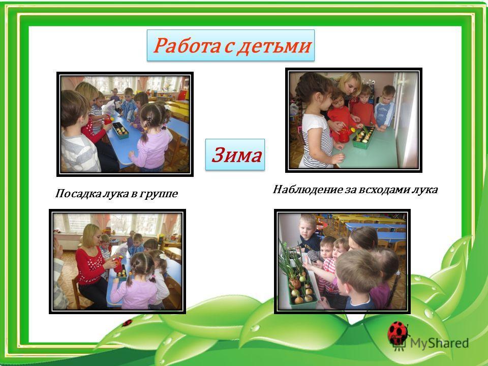 Работа с детьми Зима Посадка лука в группе Наблюдение за всходами лука