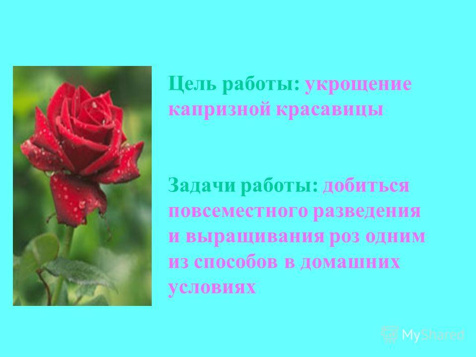 Цель работы: укрощение капризной красавицы Задачи работы: добиться повсеместного разведения и выращивания роз одним из способов в домашних условиях