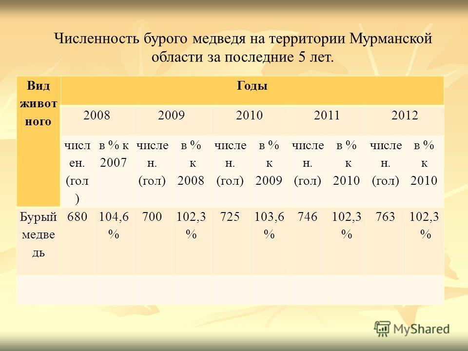 Численность бурого медведя на территории Мурманской области за последние 5 лет. Вид живот ного Годы 20082009201020112012 числ ен. (гол ) в % к 2007 числе н. (гол) в % к 2008 числе н. (гол) в % к 2009 числе н. (гол) в % к 2010 числе н. (гол) в % к 201