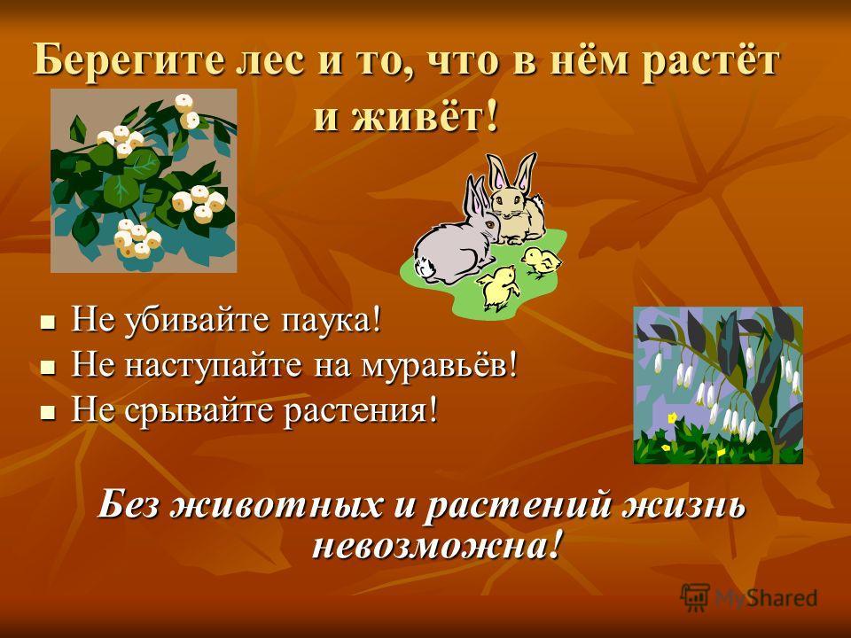 Берегите лес и то, что в нём растёт и живёт! Не убивайте паука! Не убивайте паука! Не наступайте на муравьёв! Не наступайте на муравьёв! Не срывайте растения! Не срывайте растения! Без животных и растений жизнь невозможна!