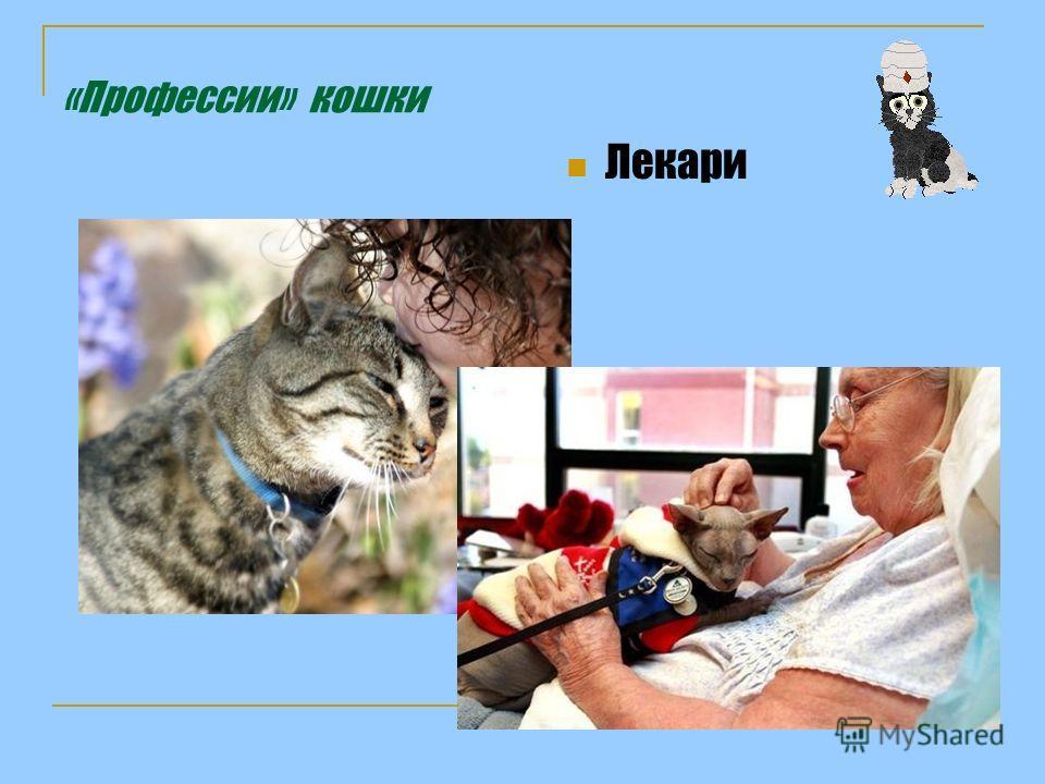 «Профессии» кошки Лекари