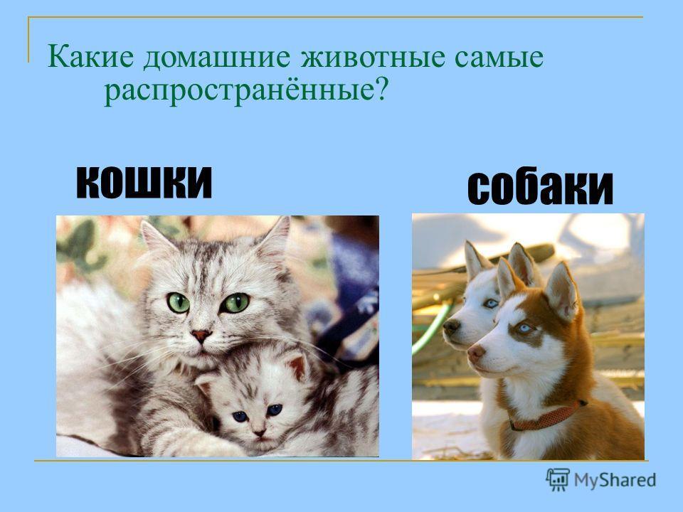 Какие домашние животные самые распространённые? кошки собаки