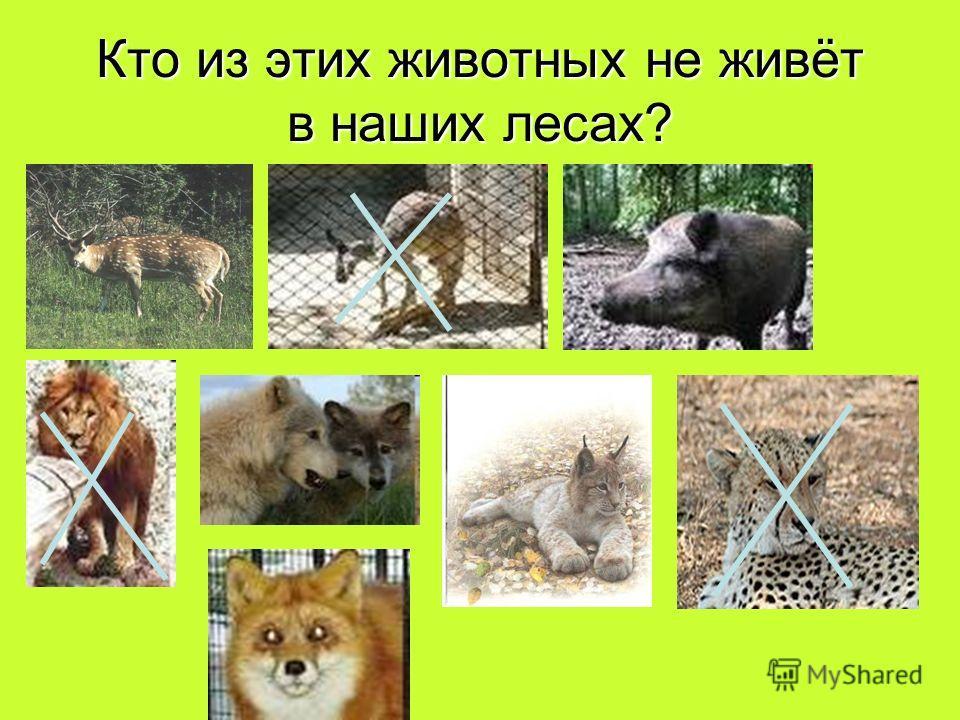 Кто из этих животных не живёт в наших лесах?