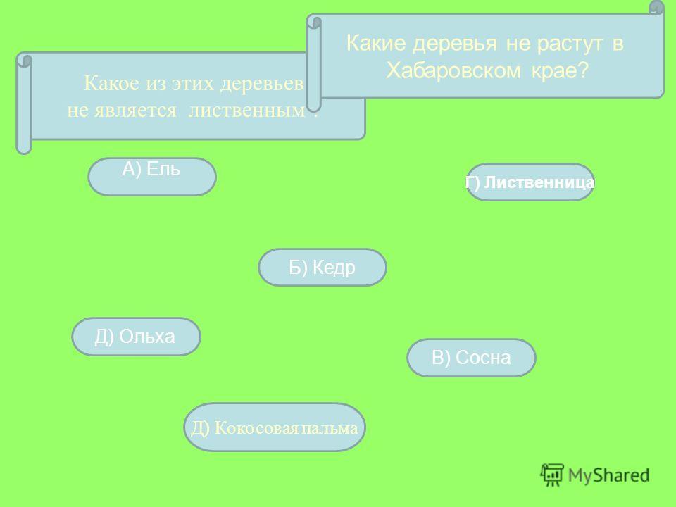 Какое из этих деревьев не является лиственным ? А) Ель Д) Ольха Б) Кедр Г) Лиственница В) Сосна Какие деревья не растут в Хабаровском крае? Д) Кокосовая пальма