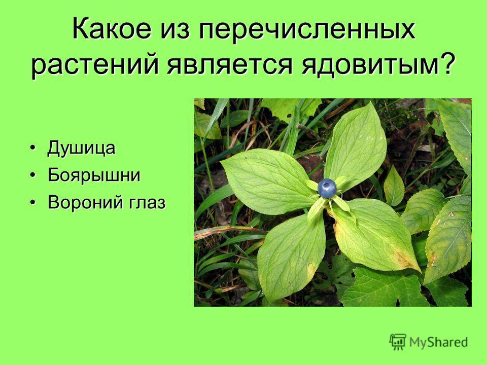 Какое из перечисленных растений является ядовитым? ДушицаДушица БоярышниБоярышни Вороний глазВороний глаз