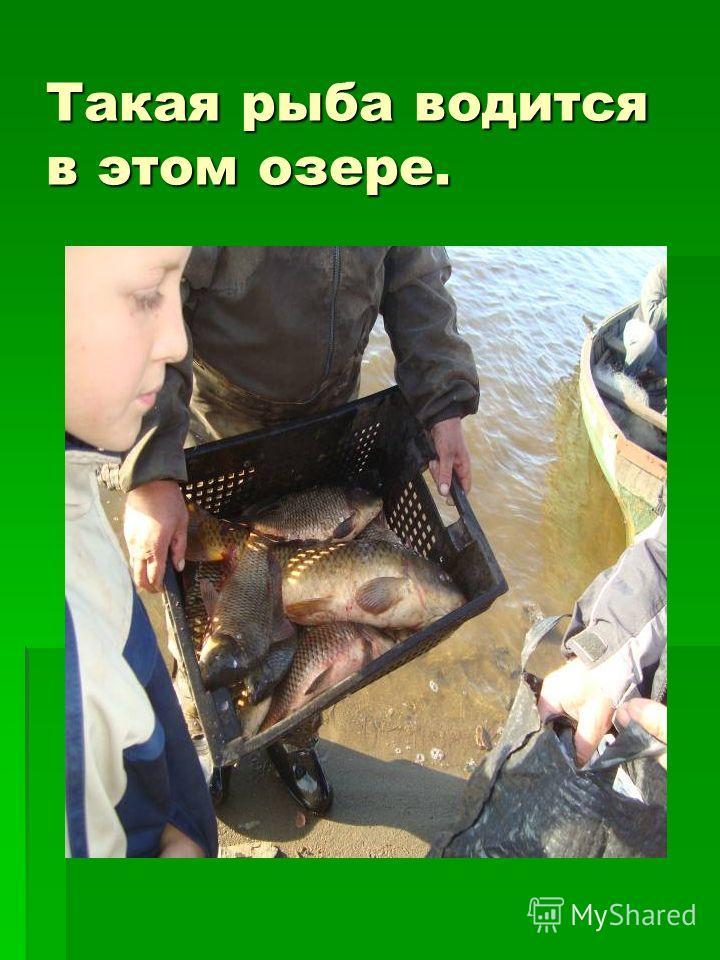 Такая рыба водится в этом озере.