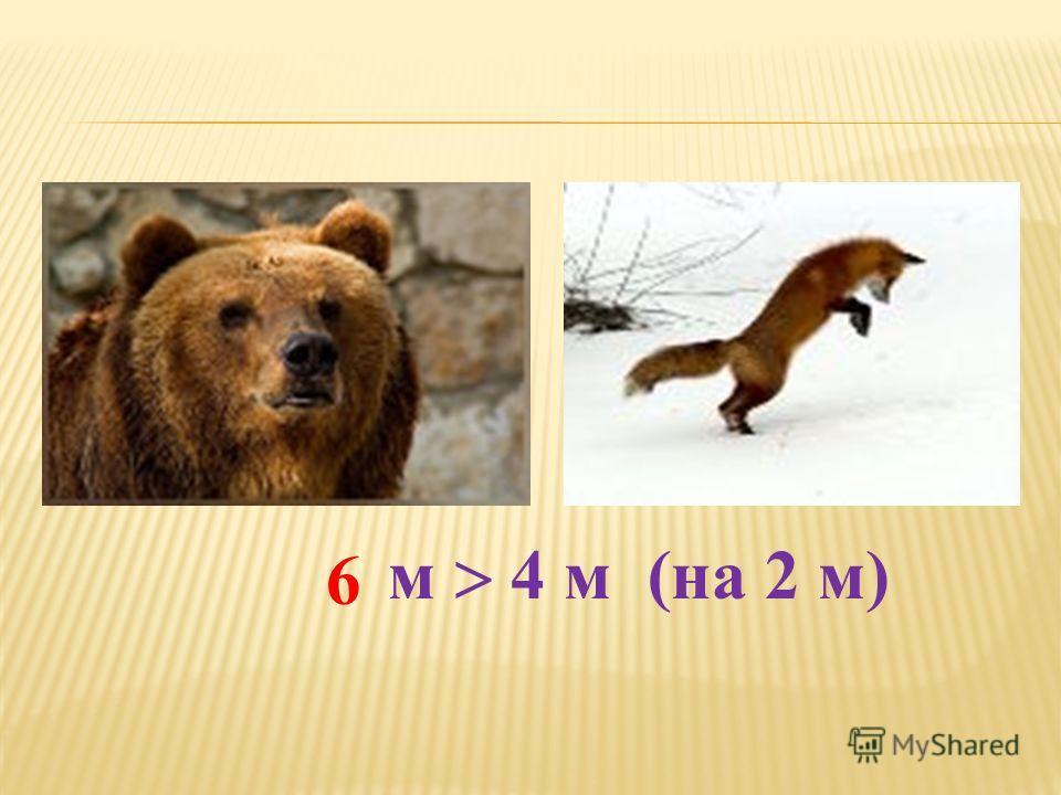 м 4 м (на 2 м) 6