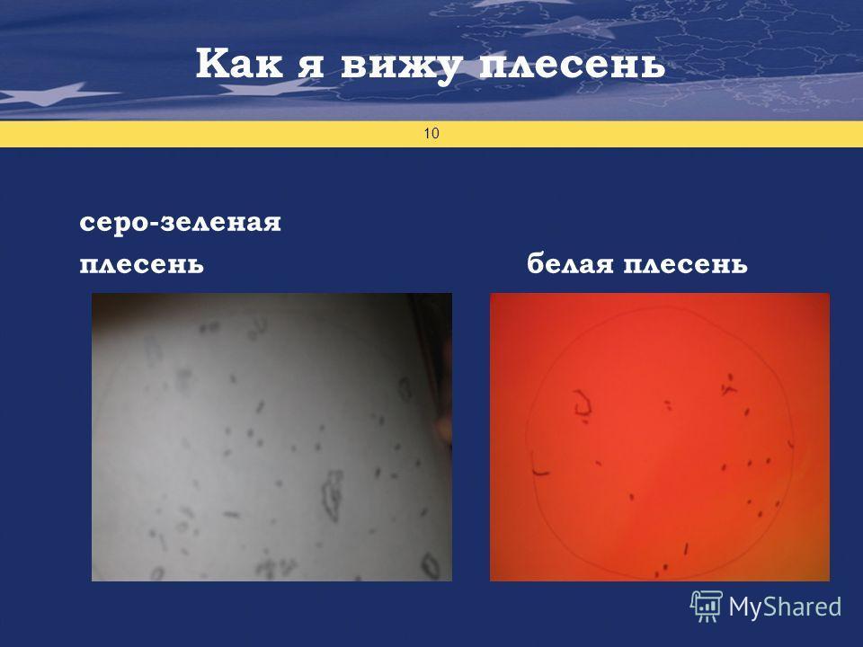 Проект финансируется Европейским Союзом 10 серо-зеленая плесень белая плесень Как я вижу плесень