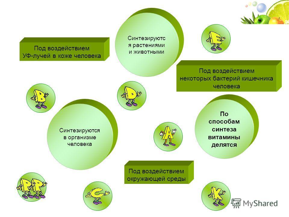 Под воздействием окружающей среды Под воздействием некоторых бактерий кишечника человека Под воздействием УФ-лучей в коже человека По способам синтеза витамины делятся Синтезируютс я растениями и животными Синтезируются в организме человека