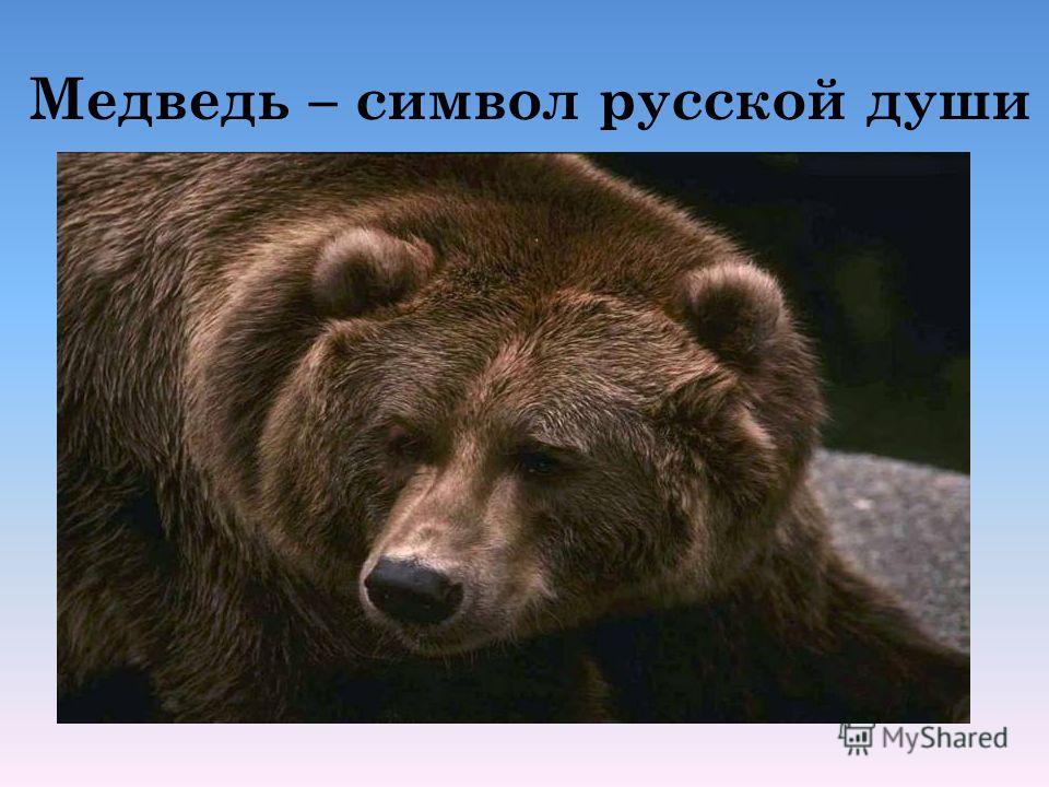 Медведь – символ русской души