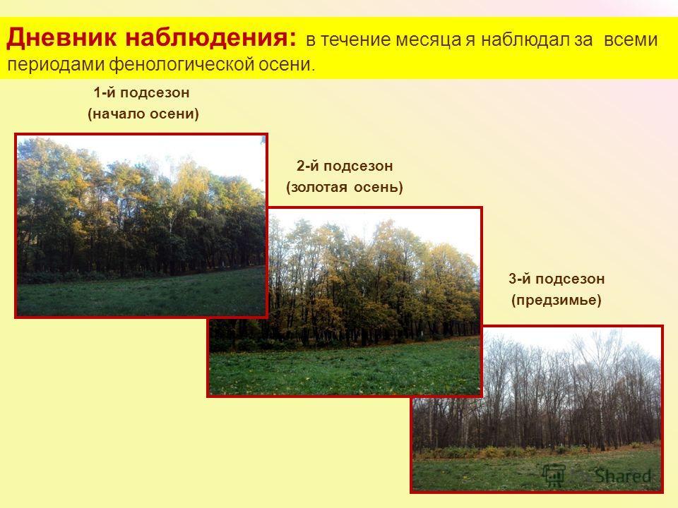 1-й подсезон (начало осени) 2-й подсезон (золотая осень) 3-й подсезон (предзимье) Дневник наблюдения: в течение месяца я наблюдал за всеми периодами фенологической осени.