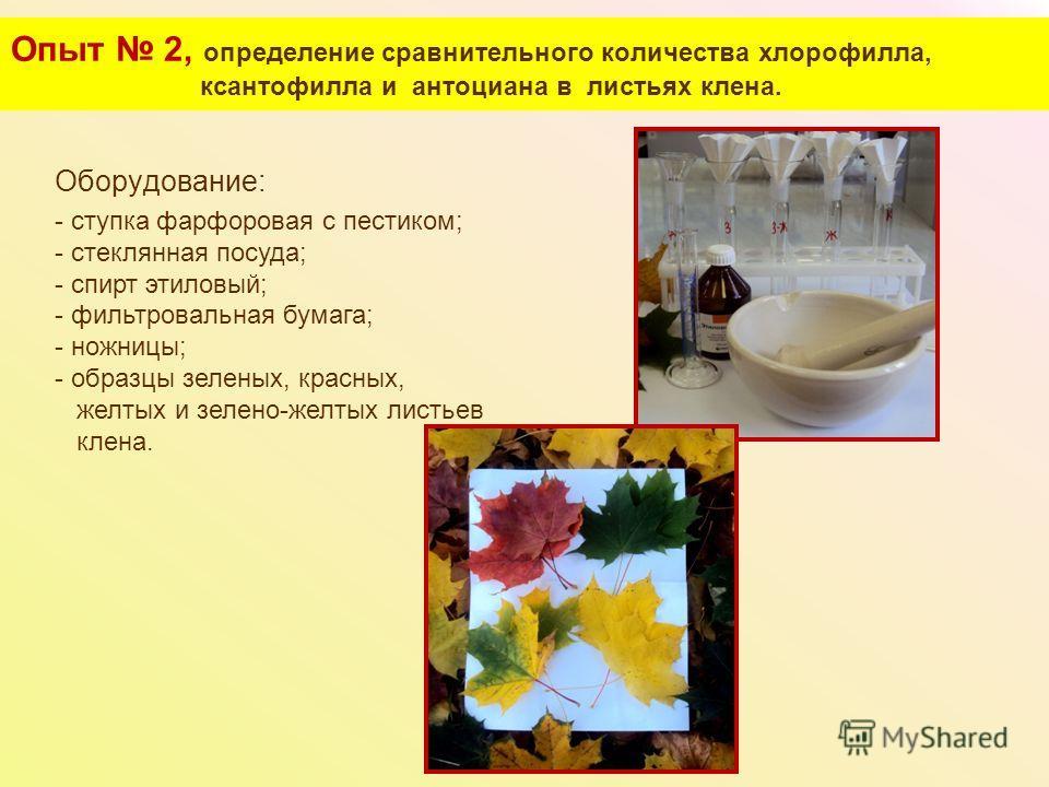 Опыт 2, определение сравнительного количества хлорофилла, ксантофилла и антоциана в листьях клена. Оборудование: - ступка фарфоровая с пестиком; - стеклянная посуда; - спирт этиловый; - фильтровальная бумага; - ножницы; - образцы зеленых, красных, же