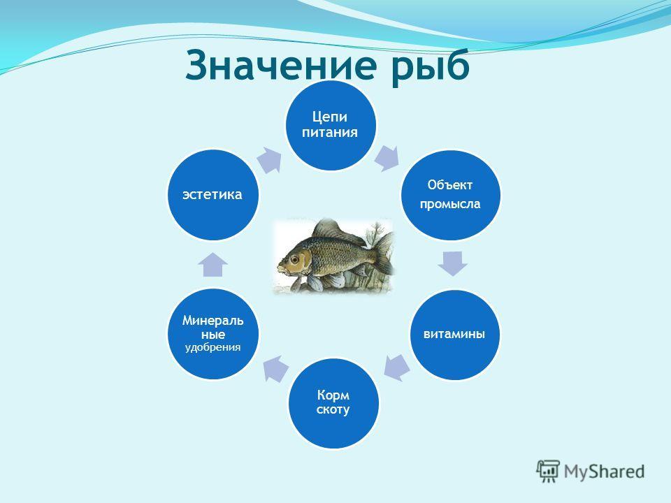Значение рыб Цепи питания Объект промысла витамины Корм скоту Минераль ные удобрения эстетика