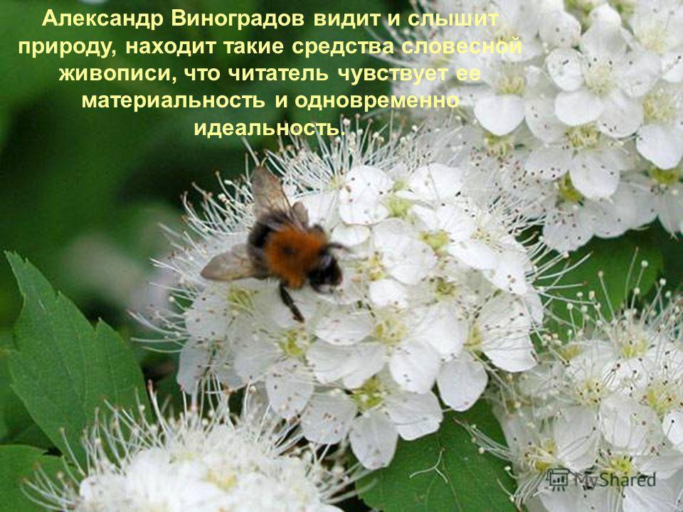 Александр Виноградов видит и слышит природу, находит такие средства словесной живописи, что читатель чувствует ее материальность и одновременно идеальность.