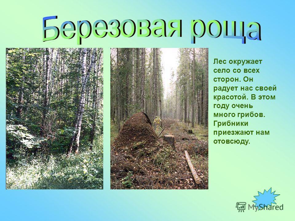 Лес окружает село со всех сторон. Он радует нас своей красотой. В этом году очень много грибов. Грибники приезжают нам отовсюду.