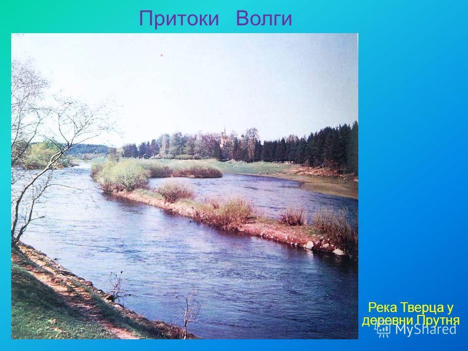 Притоки Волги Река Тверца у деревни Прутня