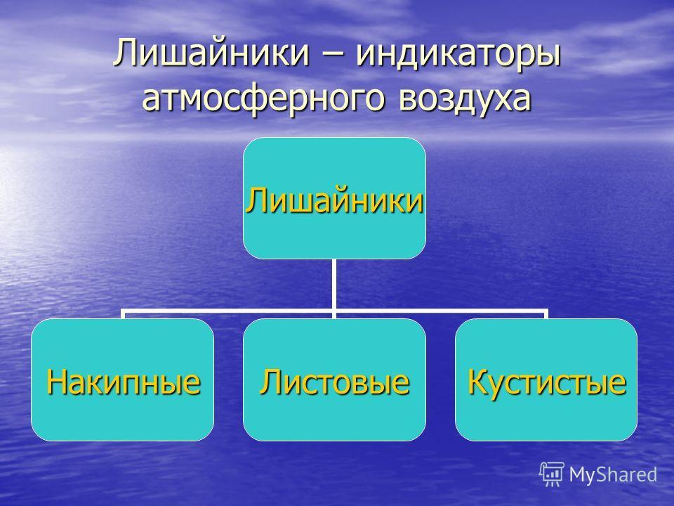 Лишайники – индикаторы атмосферного воздуха Лишайник и НакипныеЛистовыеКустистые