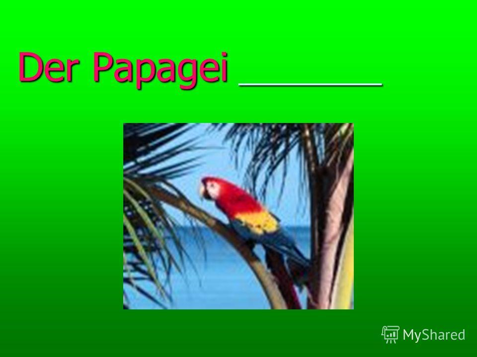 Der Papagei _________