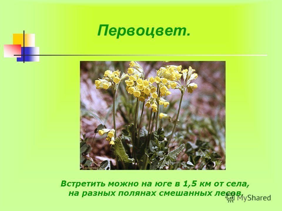 Первоцвет. Встретить можно на юге в 1,5 км от села, на разных полянах смешанных лесов.
