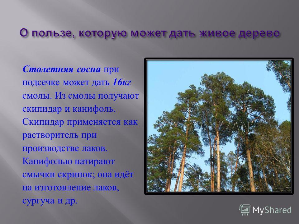 1) Сколько лет может прожить ель ? 600 лет х 2 = 1200 лет 2) Сколько лет может прожить дуб ? 1200 лет + 800 лет = 2000 лет Ответ :2000 лет может прожить дуб.