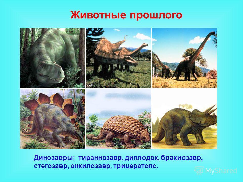 Динозавры: тираннозавр, диплодок, брахиозавр, стегозавр, анкилозавр, трицератопс. Животные прошлого