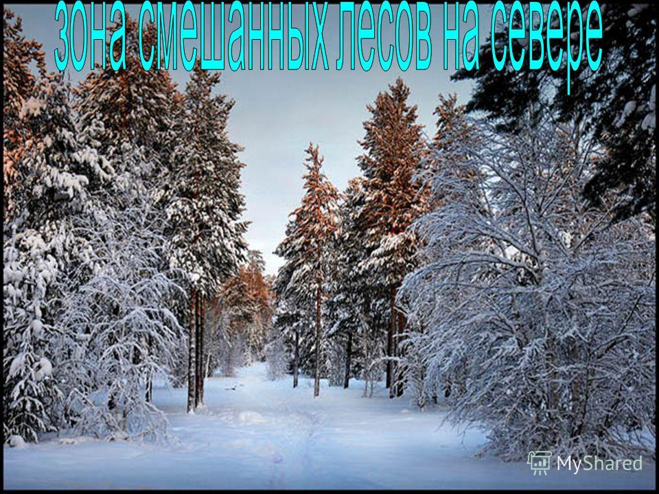 ТАЙГА (тюрк.), тип биома с хвойными бореальными лесами в умеренном поясе Северного полушария, в Северной Америке и Евразии. Тайга занимает 10% суши Земли. В горах образует высотный пояс (горная тайга); на равнинах природную зону (таежная зона), котор