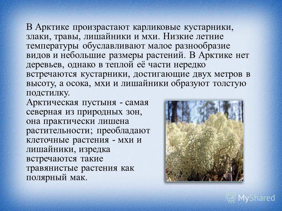 В Арктике произрастают карликовые кустарники, злаки, травы, лишайники и мхи. Низкие летние температуры обуславливают малое разнообразие видов и небольшие размеры растений. В Арктике нет деревьев, однако в теплой её части нередко встречаются кустарник