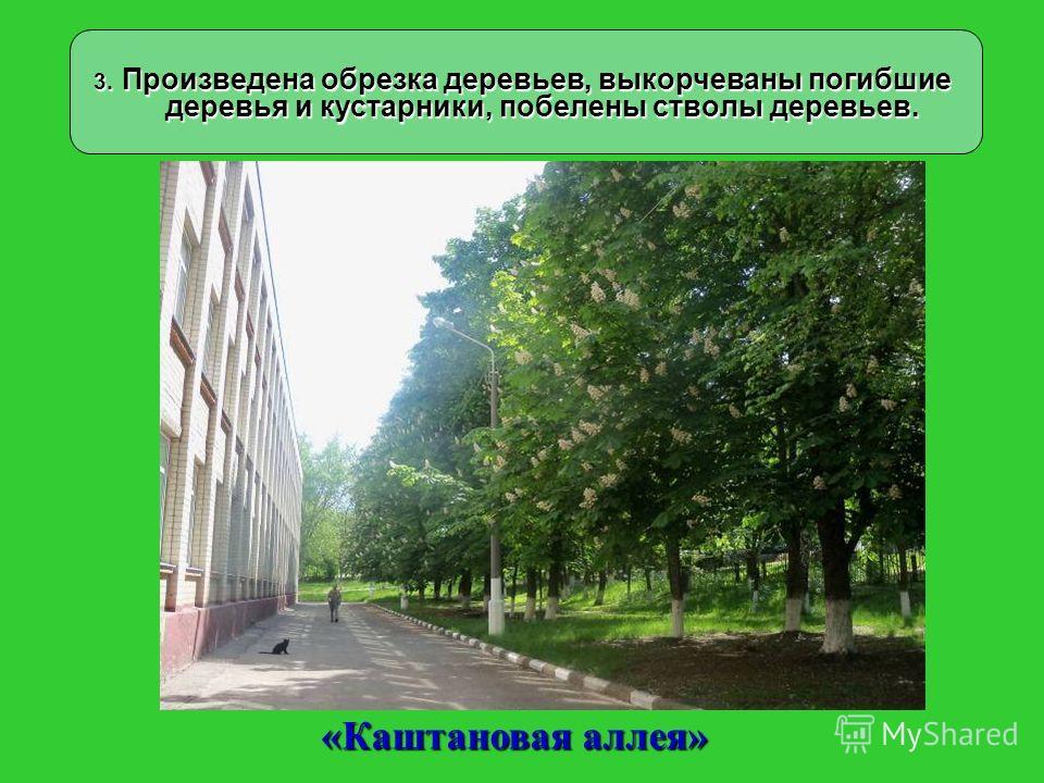 3. Произведена обрезка деревьев, выкорчеваны погибшие деревья и кустарники, побелены стволы деревьев. «Каштановая аллея»