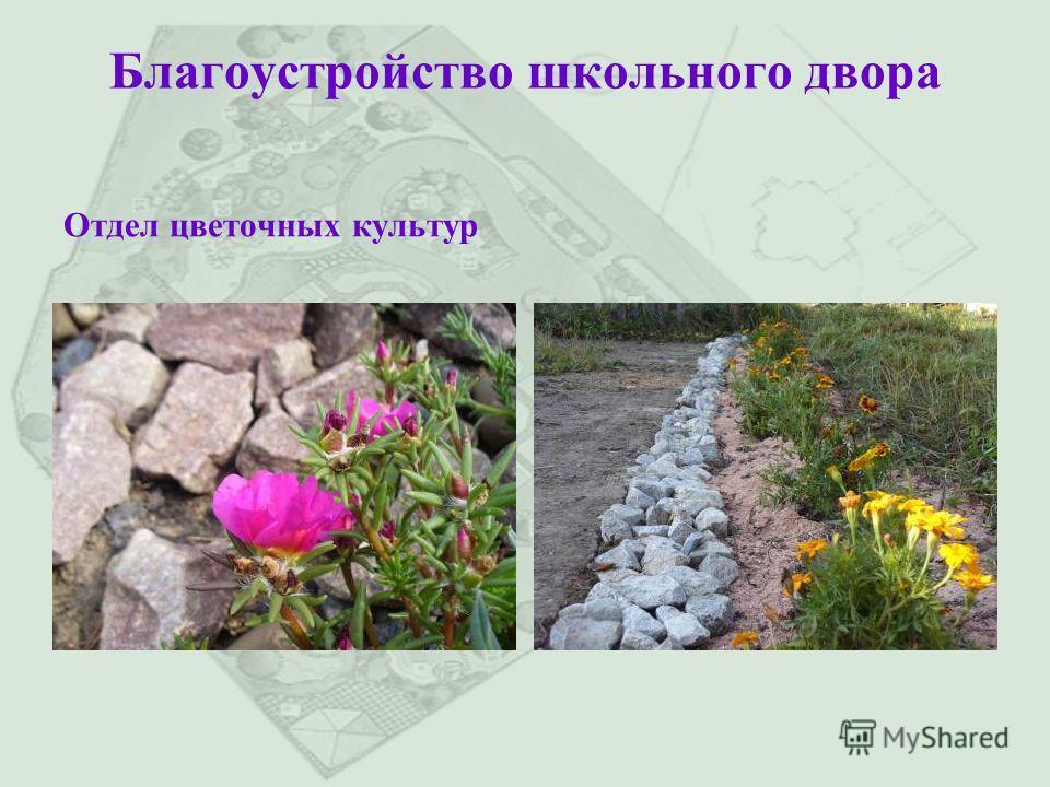 Благоустройство школьного двора Отдел цветочных культур
