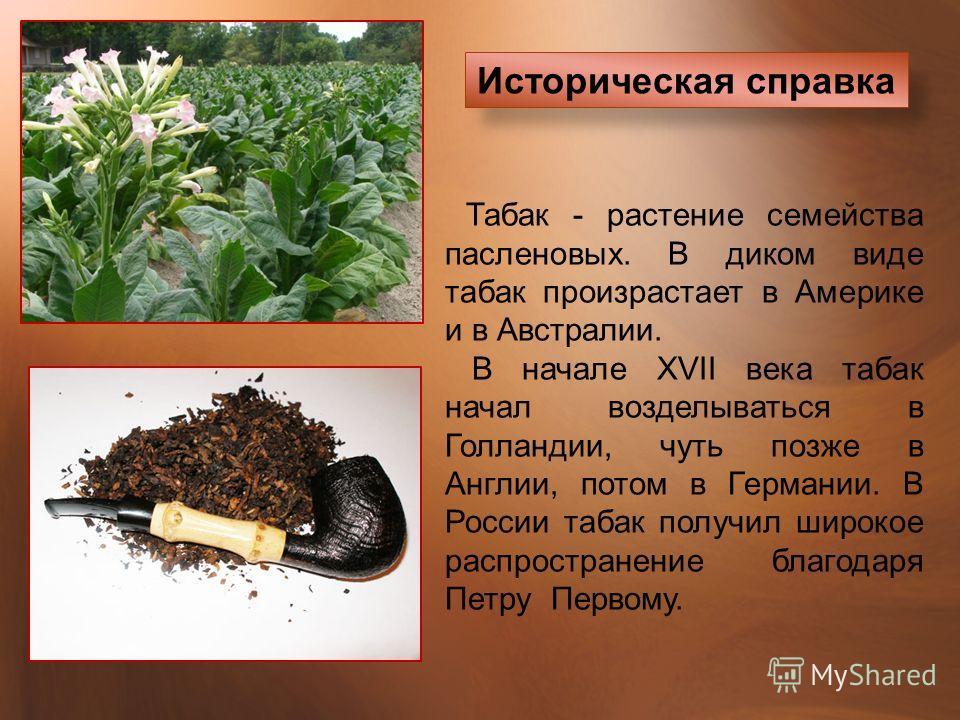 Табак - растение семейства пасленовых. В диком виде табак произрастает в Америке и в Австралии. В начале XVII века табак начал возделываться в Голландии, чуть позже в Англии, потом в Германии. В России табак получил широкое распространение благодаря