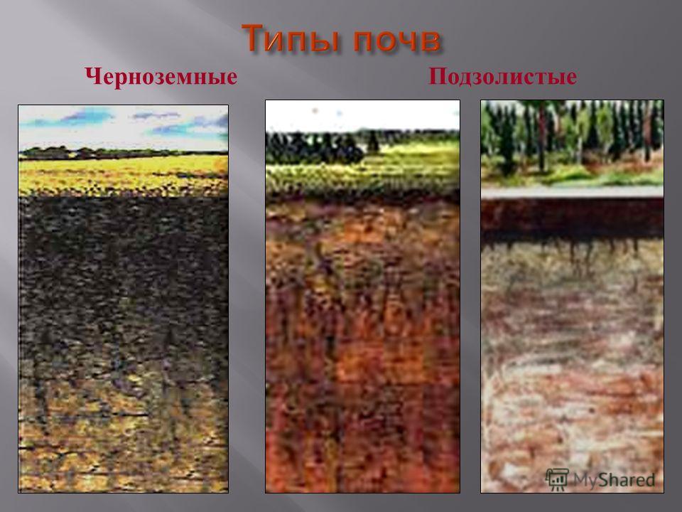 Возьмите стакан с водой положите туда почву и палочкой размешайте. Дайте немного осесть. Что вы видите ? Какой вывод можно сделать ? В почве есть песок и глина