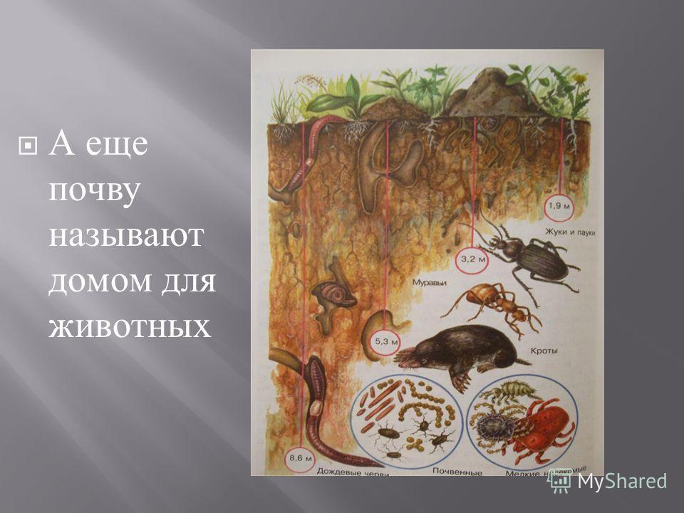 ЧерноземныеПодзолистые