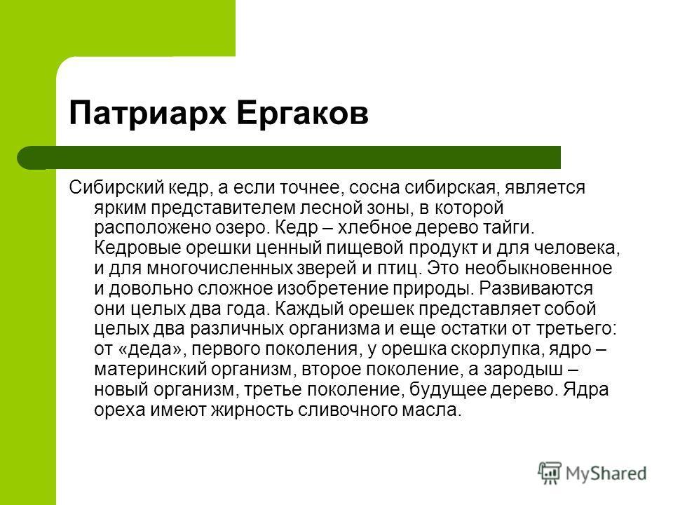 Сибирский кедр, а если точнее, сосна сибирская, является ярким представителем лесной зоны, в которой расположено озеро. Кедр – хлебное дерево тайги. Кедровые орешки ценный пищевой продукт и для человека, и для многочисленных зверей и птиц. Это необык
