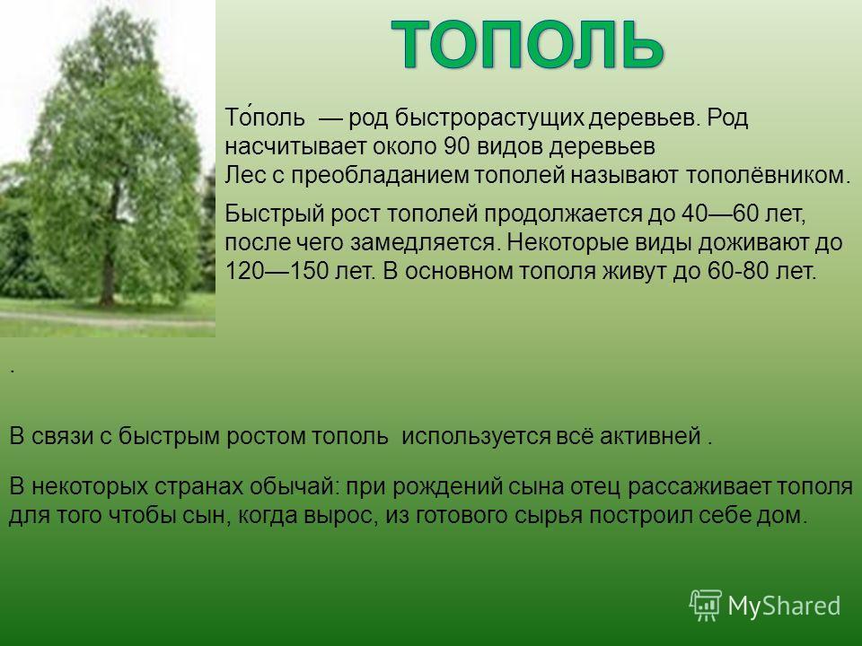 То́поль род быстрорастущих деревьев. Род насчитывает около 90 видов деревьев Лес с преобладанием тополей называют тополёвником. Быстрый рост тополей продолжается до 4060 лет, после чего замедляется. Некоторые виды доживают до 120150 лет. В основном т
