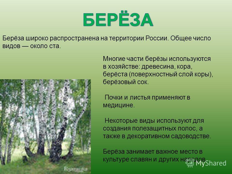 Многие части берёзы используются в хозяйстве: древесина, кора, берёста (поверхностный слой коры), берёзовый сок. Почки и листья применяют в медицине. Некоторые виды используют для создания полезащитных полос, а также в декоративном садоводстве. Берёз