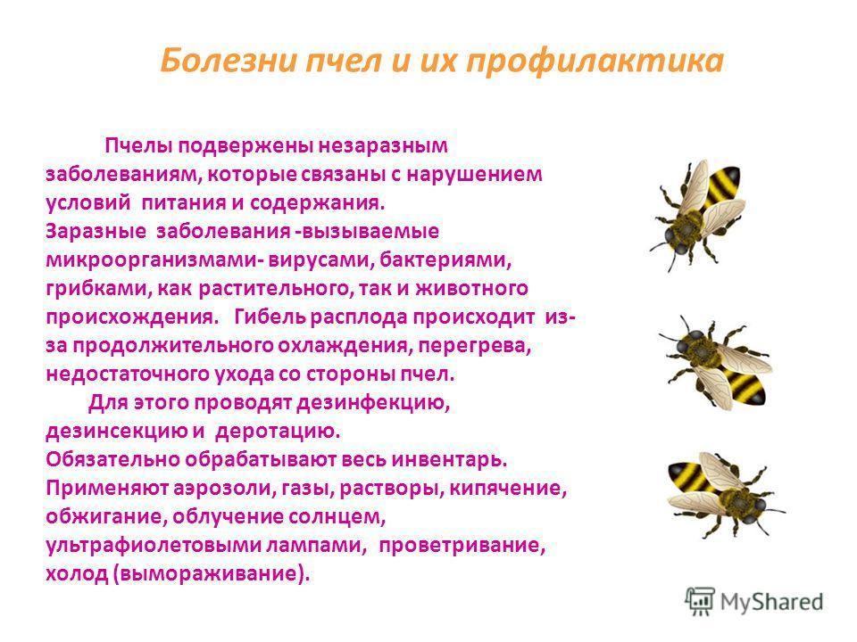 Пчеловод – универсальный специалист. Он и зоотехник, и агроном, и механизатор, и технолог, и натуралист, и мастеровой, и даже ветеринарный врач. Богата наша Родина медоносными растениями и возможности получить много меда поистине неисчерпаемы. Пчелов