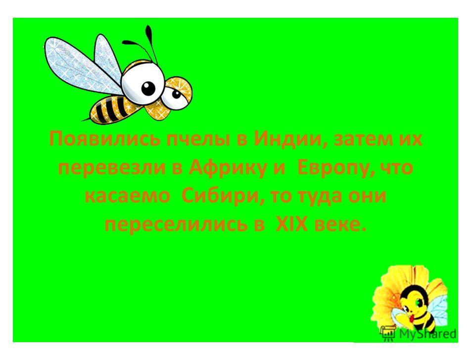Пчеловодство - одно из древнейших занятий человека. Исследователями установлено, что в России им занимались ещё в XI веке. Промыслу способствовала сама природа. Сплошной ковёр дикорастущих цветов и трав стал отличной базой для сбора мёда.