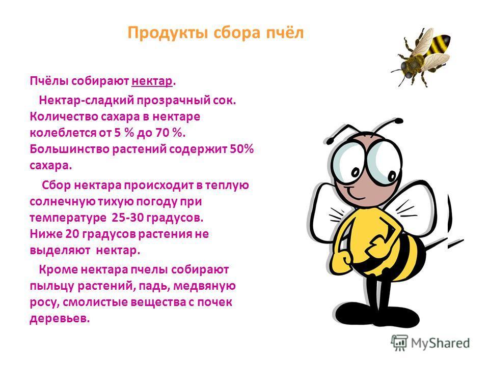 Из числа распространённых пород пчёл следует отметить: